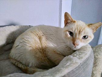 Adopt A Pet :: Just Sweetness...  - Ft Myers Beach, FL
