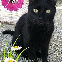 Adopt A Pet :: Joe - Sherman Oaks, CA