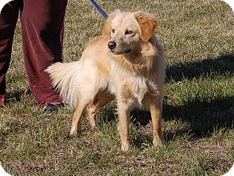 North Judson In Golden Retriever Meet Luke A Pet For Adoption