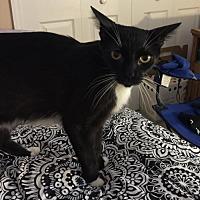 Adopt A Pet :: Birdie - Oviedo, FL
