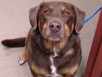 Adopt A Pet :: Champ  - Laramie, WY