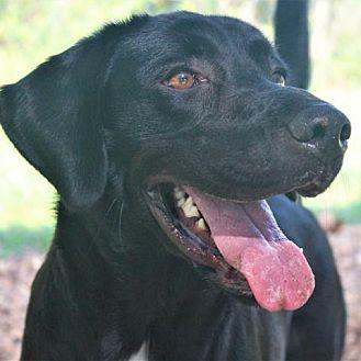 Adopt A Pet :: Luna  - Lucedale, MS