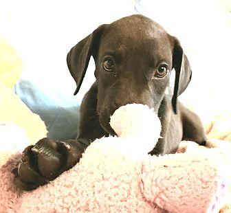 Adopt A Pet :: Thyra  - Snow Hill, NC