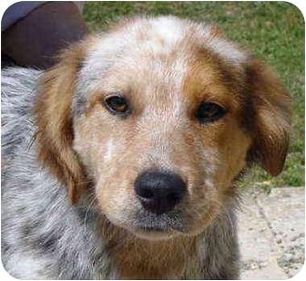 Pisgah Al Golden Retriever Meet Jack A Pet For Adoption