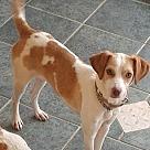 Adopt A Pet :: Daisy - Adoption Pending!