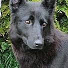Adopt A Pet :: Sheila
