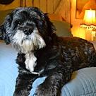 Adopt A Pet :: Luci