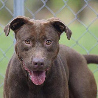 Adopt A Pet :: Devina  - Lucedale, MS