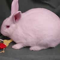 Adopt A Pet :: Loki - Williston, FL