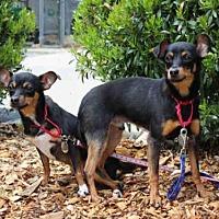 Adopt A Pet :: BUSTER - Wainscott, NY