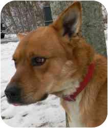 Shepherd (Unknown Type) Mix Dog for adoption in Kansas City, Missouri - Courtesy List-Geronimo