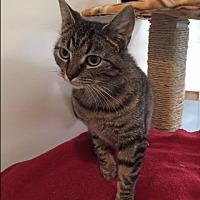 Adopt A Pet :: Sally - Ashland, OH