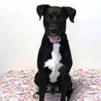 Adopt A Pet :: THORN - Hampton Bays, NY