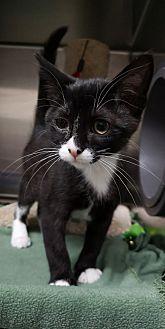 Adopt A Pet :: Keisha  - Moose Jaw, SK
