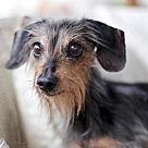 Adopt A Pet :: MOJO