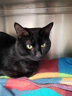 Adopt A Pet :: Niles  - Edmonton, AB