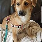 Adopt A Pet :: Elvin