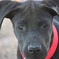 Adopt A Pet :: Maxie - Hooksett, NH
