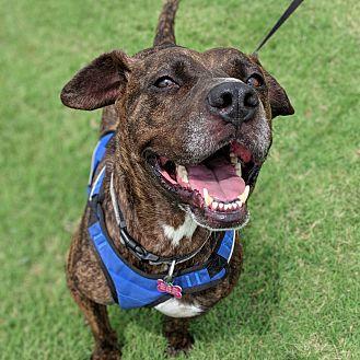Adopt A Pet :: Keegan  - Oklahoma City, OK