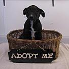 Adopt A Pet :: Albany