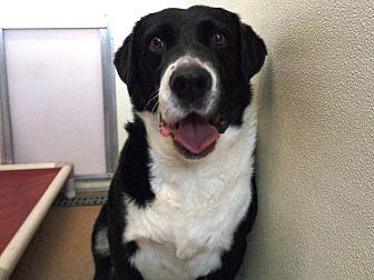Adopt A Pet :: Rocky  - Laramie, WY