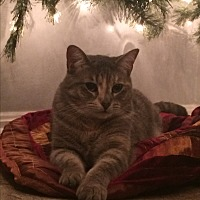 Adopt A Pet :: Maggie (COURTESY POST) - Baltimore, MD