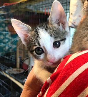 Adopt A Pet :: Lexi  - Devon, PA