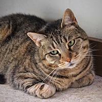 Adopt A Pet :: Nirvana - Wayne, NJ