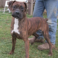 Adopt A Pet :: CLIFFORD - WOODSFIELD, OH