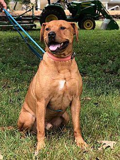 Adopt A Pet :: Kegger  - Clarksville, TN