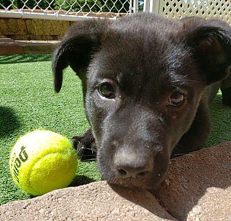 Adopt A Pet :: PETER  - Snow Hill, NC