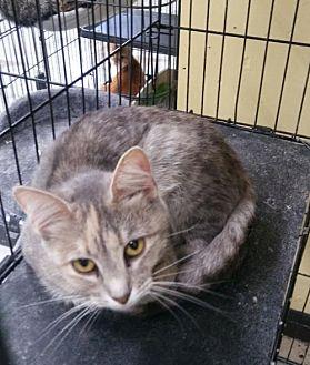Adopt A Pet :: Marshmellow  - Mt Vernon, IN
