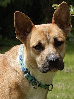 Adopt A Pet :: Daphne  - Nashua, NH