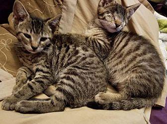 Adopt A Pet :: Charlie and Celie  - Virginia Beach, VA