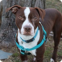 Adopt A Pet :: Willy - Newtown, CT