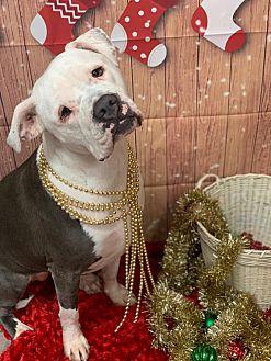 Adopt A Pet :: Amy  - Oklahoma City, OK