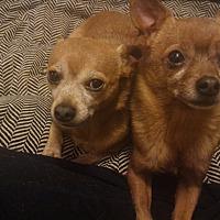 Adopt A Pet :: LANCE - Toronto/GTA, ON