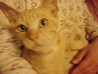 Domestic Shorthair Cat for adoption in Redding, California - 5 boys *Courtesy Post*