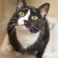 Adopt A Pet :: Serena - New Freedom, PA